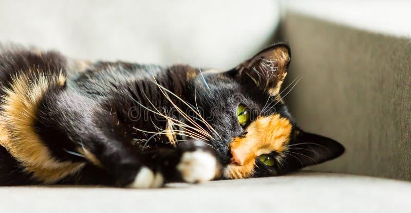 Zamyka up twarz czarny i imbirowy kot zdjęcie stock
