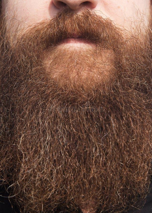 Zamyka up twarz z gęstą brodą zdjęcie royalty free