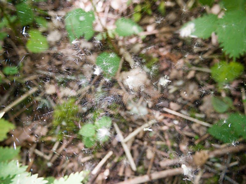 zamyka up wielka pająk sieć z białym fluff zdjęcia royalty free