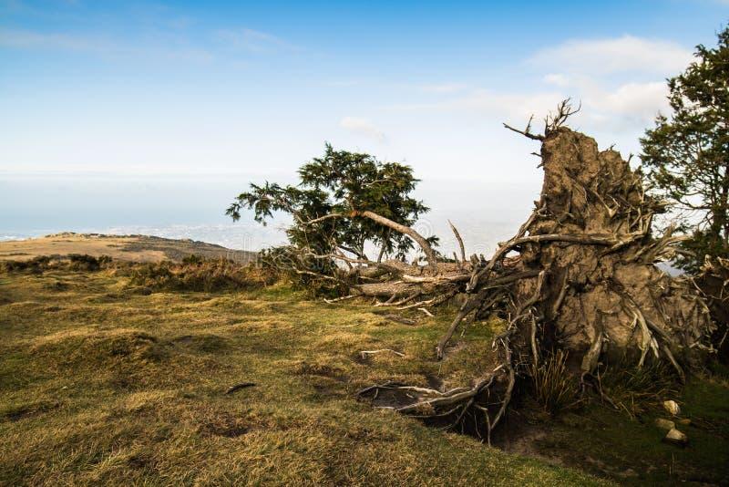 Zamyka up wykorzeniający gigantyczny drzewny lying on the beach na ziemi w pięknym krajobrazowym widoku w niebieskim niebie zdjęcie stock