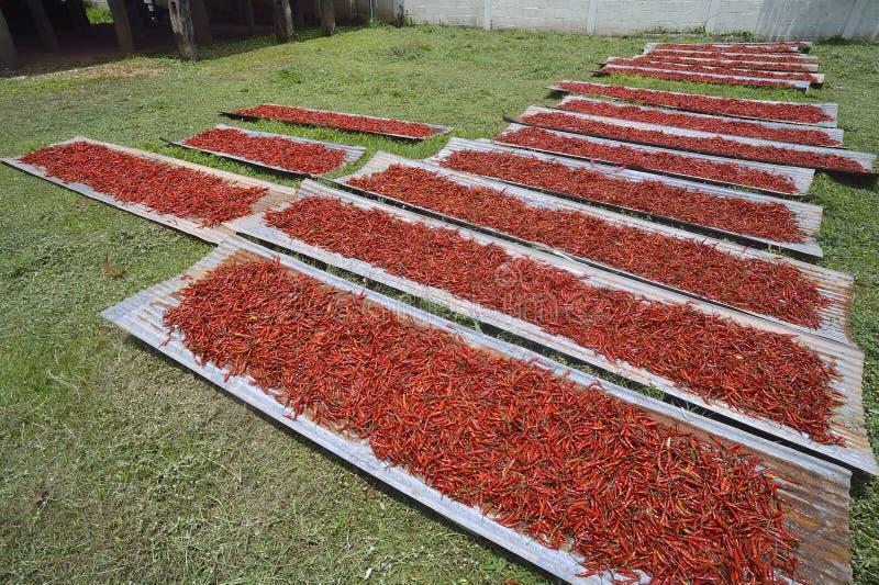 Zamyka up wysuszony chili, karmowy składnik zdjęcie stock