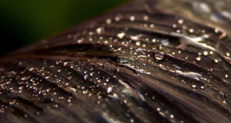 Zamyka w górę egzotycznego mokrego liścia od fotografia royalty free