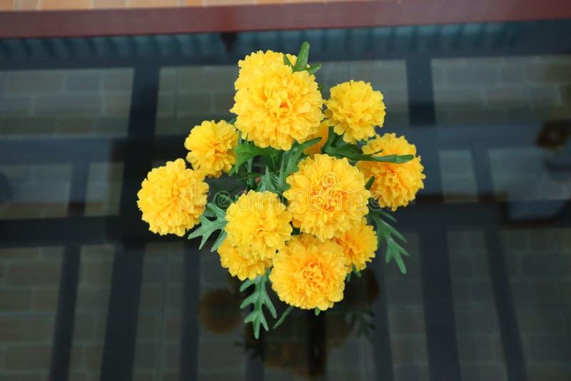 Zamyka w górę, piękni kolorów żółtych kwiaty na szkło stole zdjęcia royalty free
