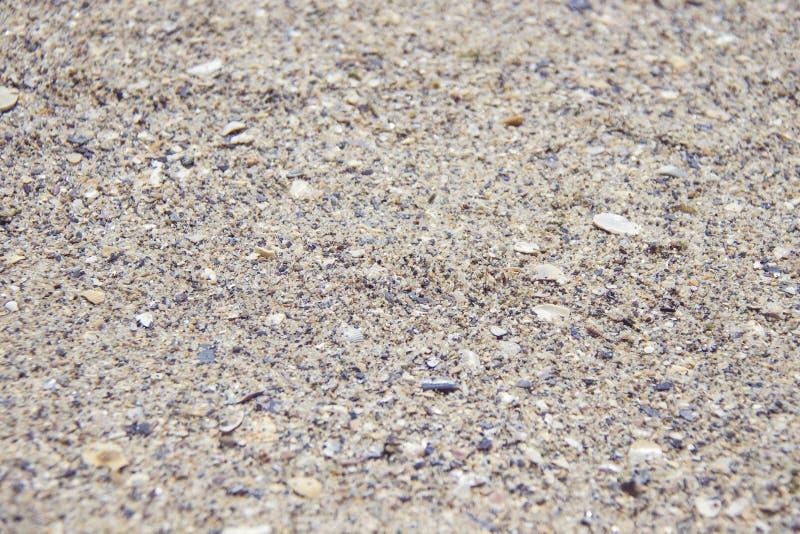 Zamyka w górę łamanego seashell z dziurami na piasku przy plażą morzem zdjęcie royalty free