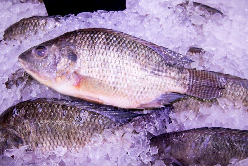Zamyka w górę świeżej ryby w tacy z lodem na rynku Dla cateringu Kontrola jakości w rynku fotografia royalty free