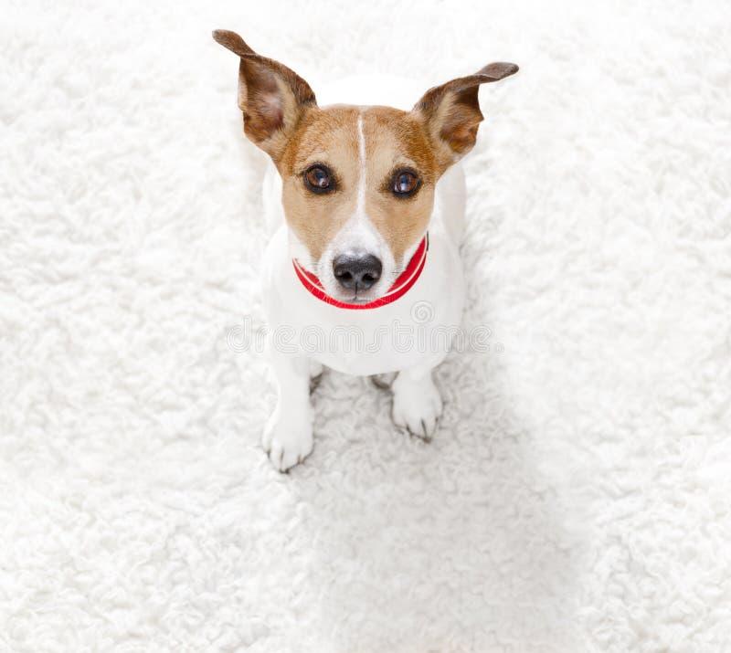 Zamyka w górę ciekawego psiego widoku zdjęcie stock