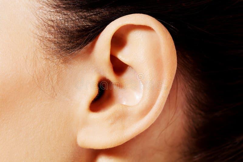 Zamyka w górę fotografii żeński ucho zdjęcie royalty free