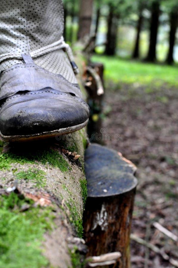 Zamyka w górę kraju zachodniego kowbojskiego buta na bagażniku drzewo w zielonym drewnie - rocznika retro styl obrazy royalty free