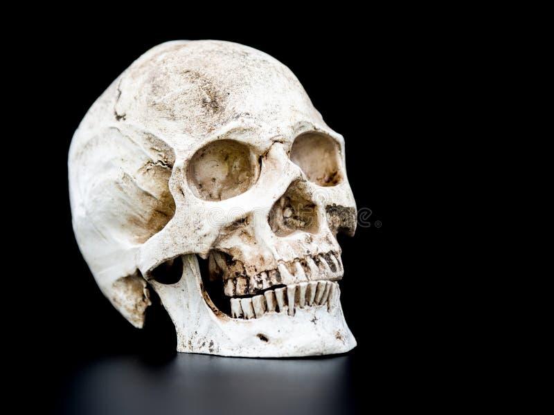 Zamyka w górę Ludzkiej czaszki na czarnym tle Pojęcie Halloween obraz stock
