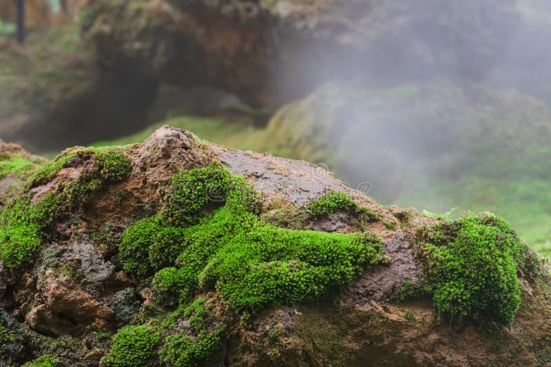 Zamyka w górę makro- strzału piękni zdrowi greenmoss narastający w górę skały z mgłą w tle na Zielony natury tapety t?o obrazy royalty free
