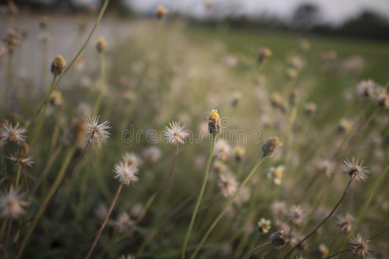 Zamyka w górę obrazków dzicy kwiaty obraz stock