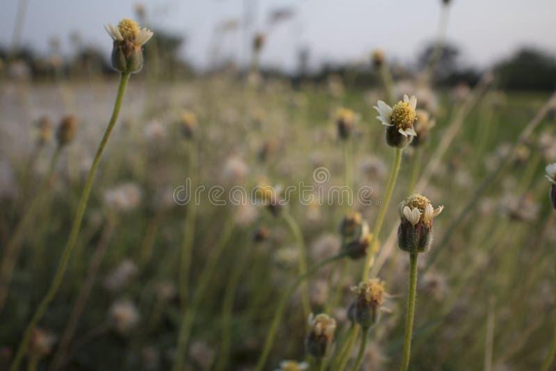 Zamyka w górę obrazków dzicy kwiaty zdjęcie stock