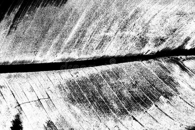 Zamyka w górę odgórnego widoku bananowego liścia w czarny i biały skutku fotografia royalty free