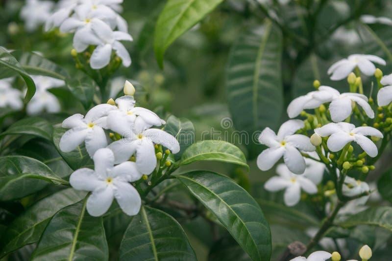 Zamyka w górę Pięknej grupy różowi tropikalni kwiaty zdjęcia stock