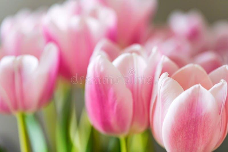 Zamyka w górę Pięknych różowych tulipanów zdjęcia stock