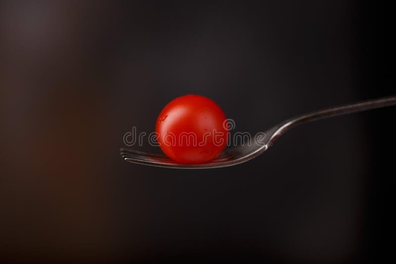 Zamyka w górę pomidoru na rozwidleniu na zmrok zamazującym tle fotografia stock