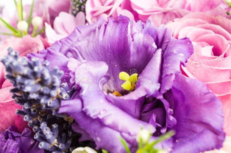 Zamyka w górę purpurowego eustoma z menchii różą obrazy stock
