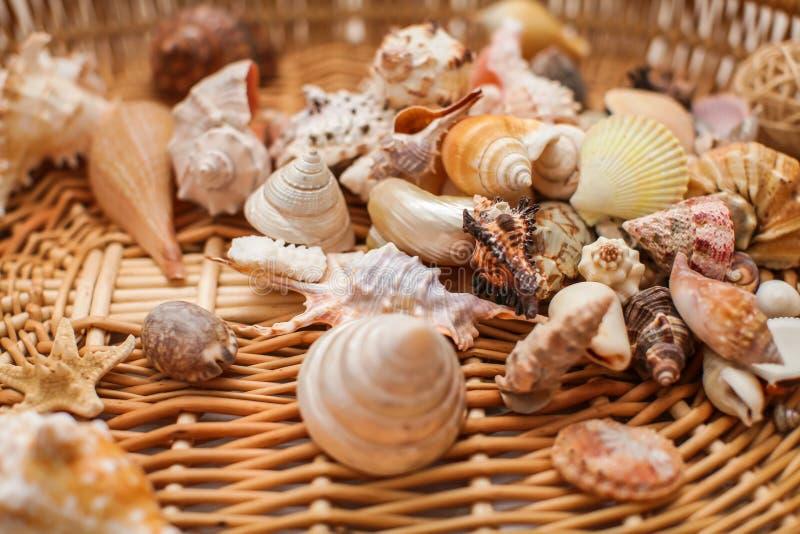 Zamyka w górę Różnorodnych kształtów seashells na tkanej łozinowej teksturze w selekcyjnej ostrości obrazy royalty free