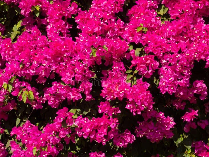Zamyka w górę różowych kwiatów jest beautyful jaskrawy zdjęcia stock