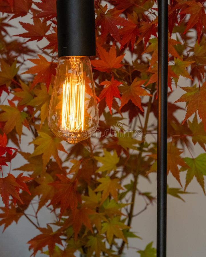 Zamyka w górę retro biurko lampy z blub i czarnych dopasowań, japońscy liście klonowi w jesień kolorach za obrazy royalty free