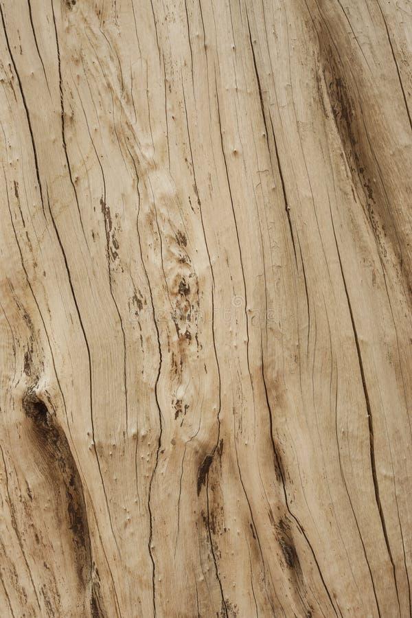 Zamyka w górę starego korowatego drewnianego wzorzystego tekstury tła w naturalny wzorzystym i barwi dla projekta, abstrakcjonist zdjęcie stock