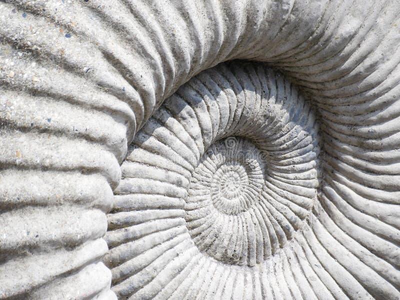 Zamyka w górę szczegółowego wizerunku amonit skamieliny tekstura obraz stock