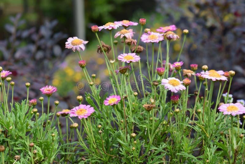 Zamyka w górę trawy i kwiatu zdjęcie stock