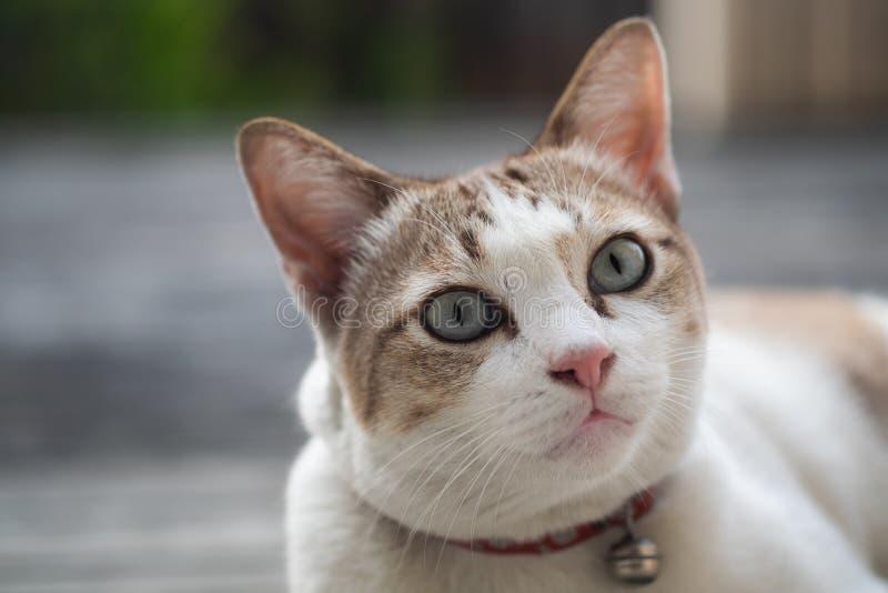 Zamyka w górę widoku śliczny kot, selekcyjna ostrość obraz royalty free
