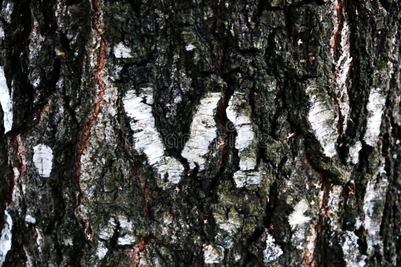 Zamyka w górę widoku brzozy barkentyna dla tło tekstury obrazy stock