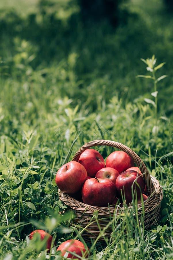 zamyka w górę widoku dojrzali jabłka w łozinowym koszu obraz stock