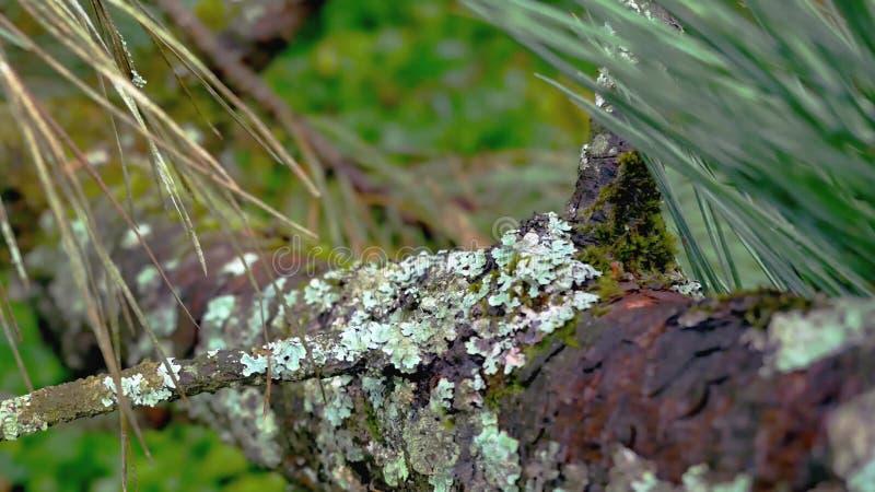 Zamyka w górę widoku drzewna guzek tekstura jak twarz zdjęcia stock