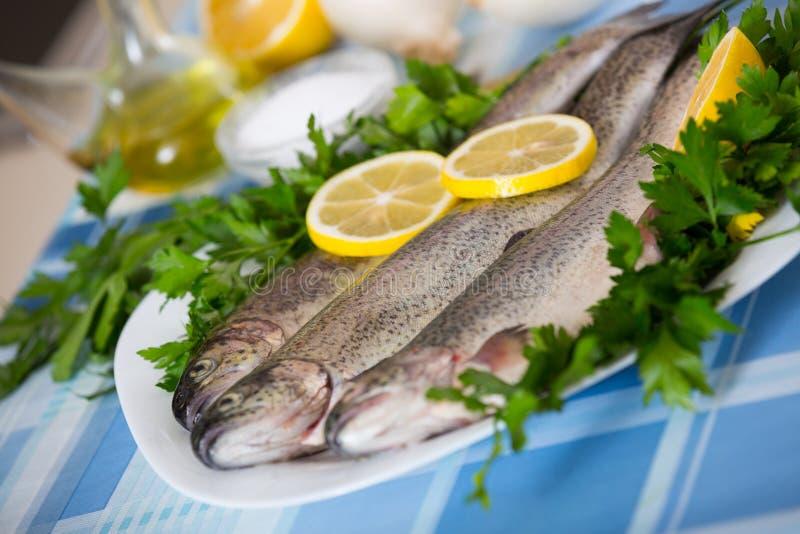 Zamyka w górę widoku przy denną węgorz ryba przygotowywającą dla gotować obraz royalty free