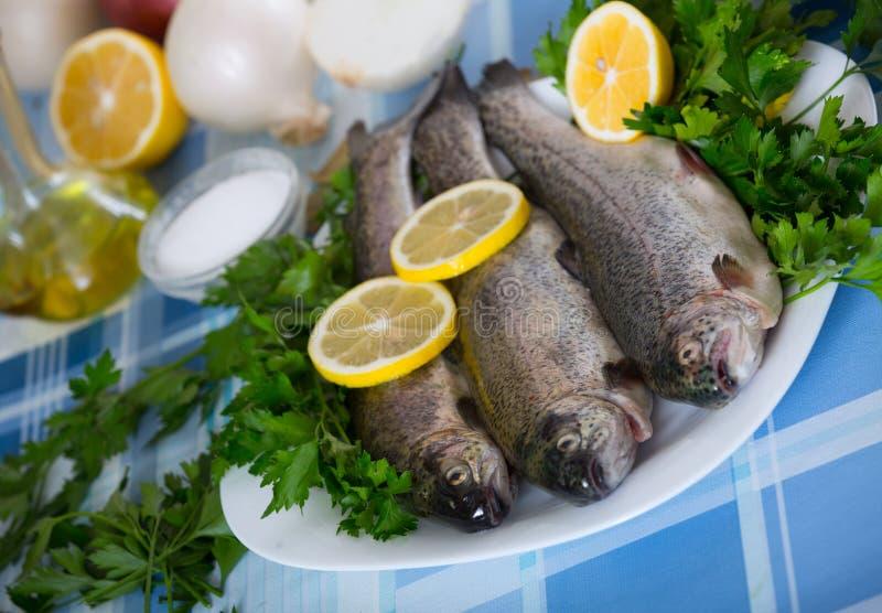 Zamyka w górę widoku przy denną węgorz ryba przygotowywającą dla gotować zdjęcia royalty free