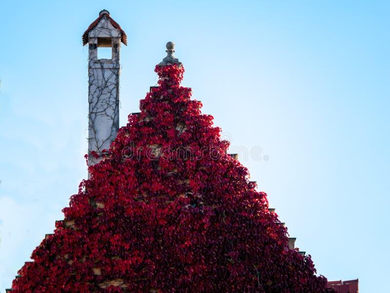 Zamyka w górę wizerunku dach zakrywający z kolorowymi liśćmi obrazy stock