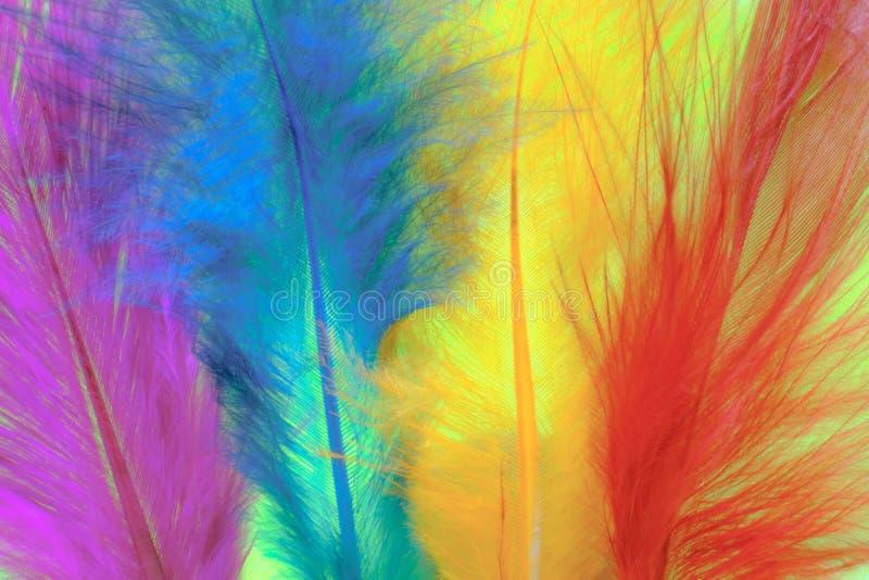 Zamyka w górę wizerunku na kolorowym piórku Pojęcia Kolorowy tło obrazy royalty free