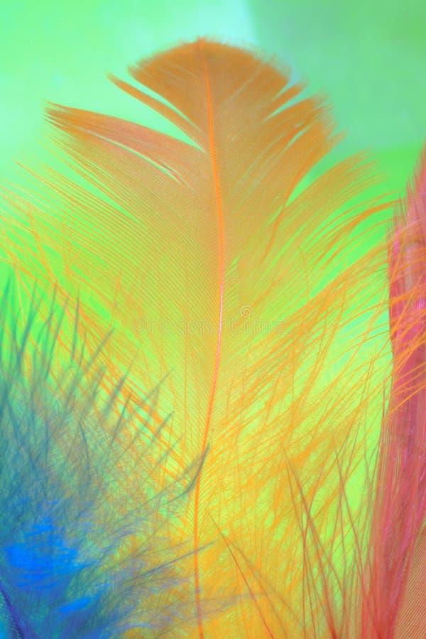 Zamyka w górę wizerunku na kolorowym piórku Pojęcia Kolorowy tło zdjęcie stock