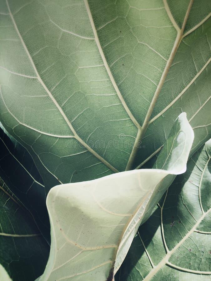 Zamyka w górę zielonego urlop rośliny słońca światła zdjęcia stock
