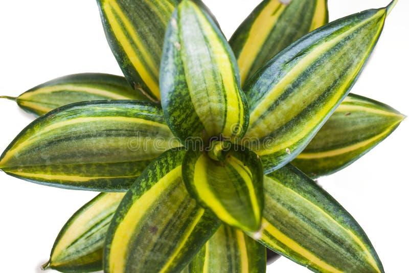 Zamyka w górę zielonej rośliny liści obrazy royalty free