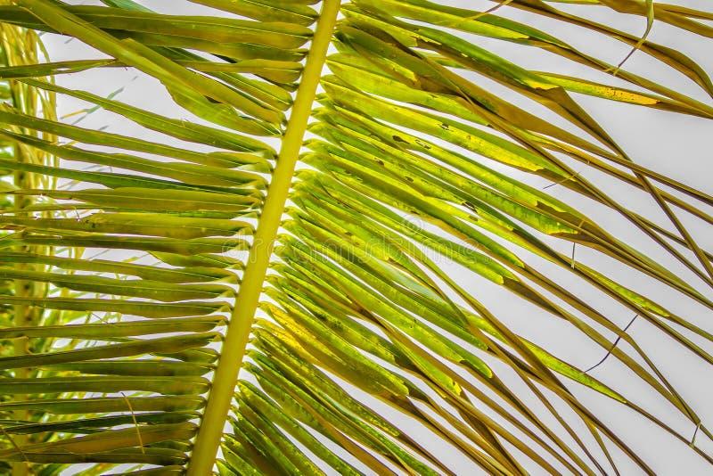 Zamyka w g?r? rocznik fotografii palmowy li??, abstrakt zielona tekstura i naturalny t?o, obraz royalty free