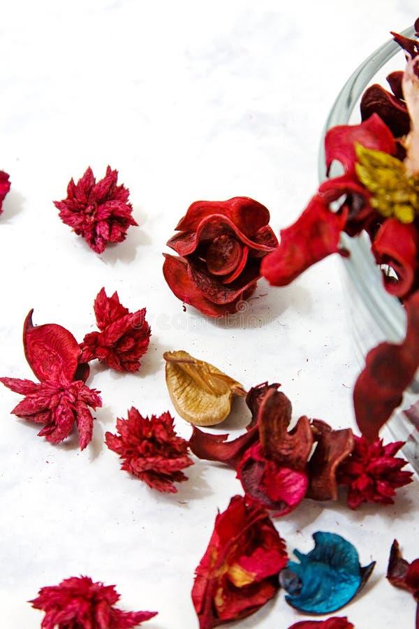 zamyka wysuszonych liść wzrastał wysuszony zdjęcie royalty free