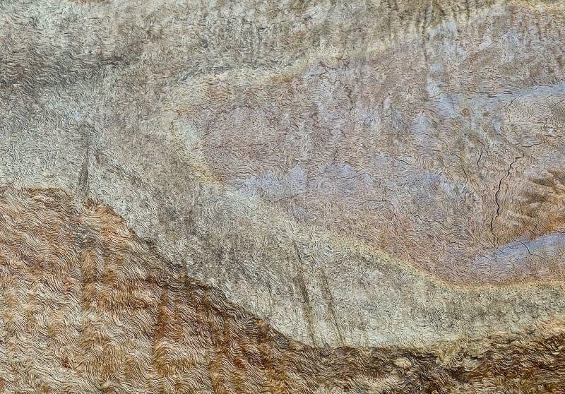 Zamykający Up Brown tekstury Drewniany tło zdjęcie royalty free