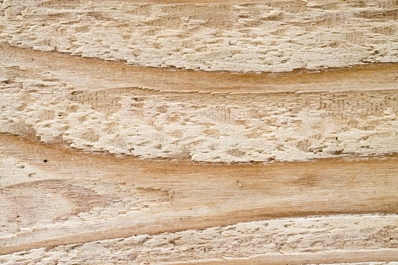 Zamykający w górę drewnianego tekstury tła, makro- tryb zdjęcie stock