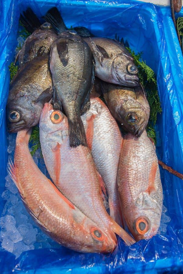 Zamykający w górę kosza ryba w rynku, Japonia obraz stock