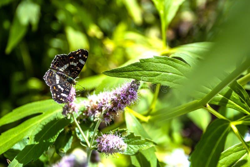 Zamykający w górę motyla na kwiacie - Zamazuje kwiatu tło zdjęcie stock