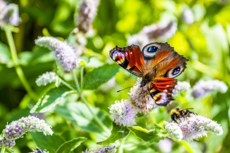 Zamykaj?cy w g?r? motyla na kwiacie - Zamazuje kwiatu t?o zdjęcie stock