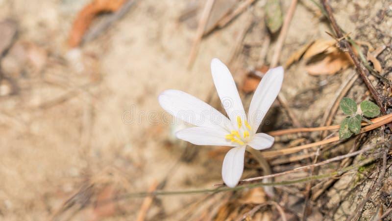 Zamykanie śnieżnych lasów Cypru obrazy royalty free
