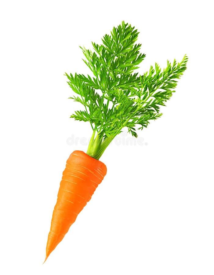 Zanahoria aislada imágenes de archivo libres de regalías