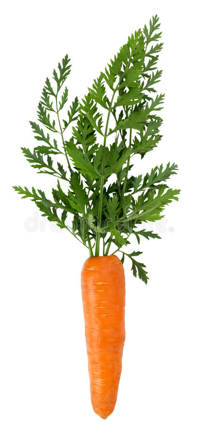 Zanahoria aislada en el fondo blanco imágenes de archivo libres de regalías