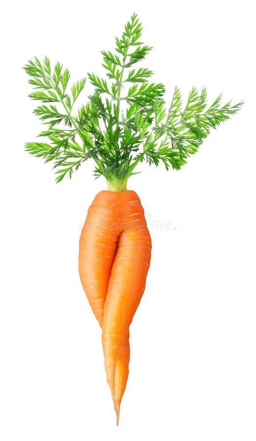 Zanahoria atractiva fotos de archivo libres de regalías