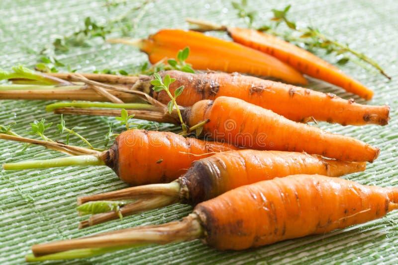 Zanahoria dulce fresca fotografía de archivo libre de regalías